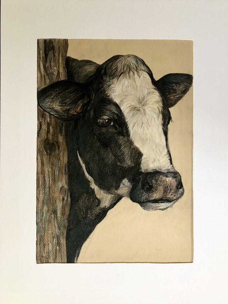 """Картина """"Портрет быка"""""""